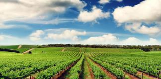 Vakıfbank Tarım Kart Nedir