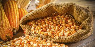 Forexde mısır yatırımı