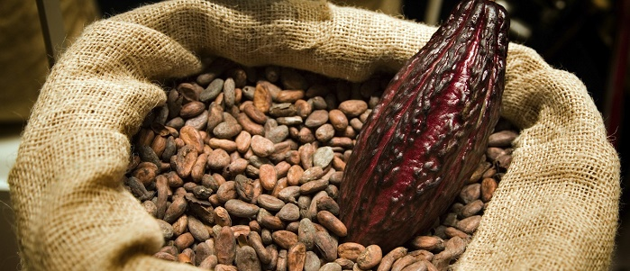 Forex'te Kakao Yatırımı Yaparak Para Kazanmak